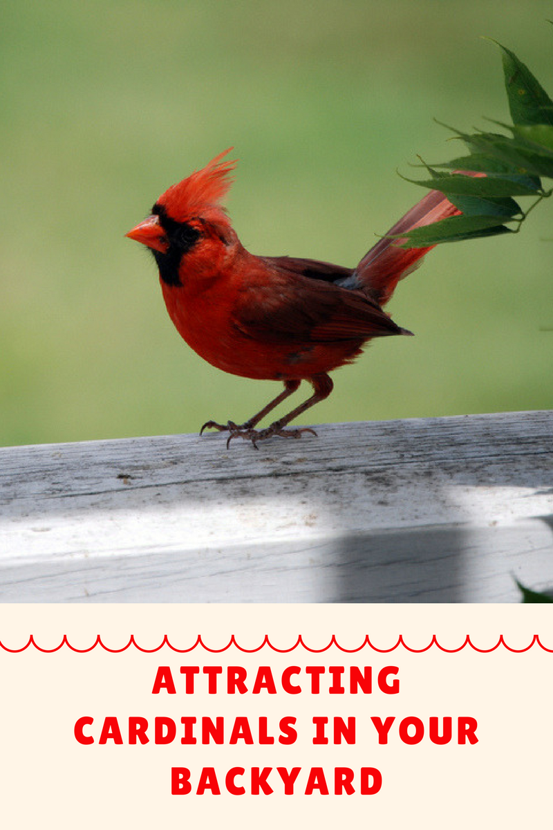 a guide to attracting birds to your yard How to attract birds to your backyard majestic, beautiful, and amazing––diving and flipping in mid-air spectacularly, birds are unparalleled in value for watching from the garden.