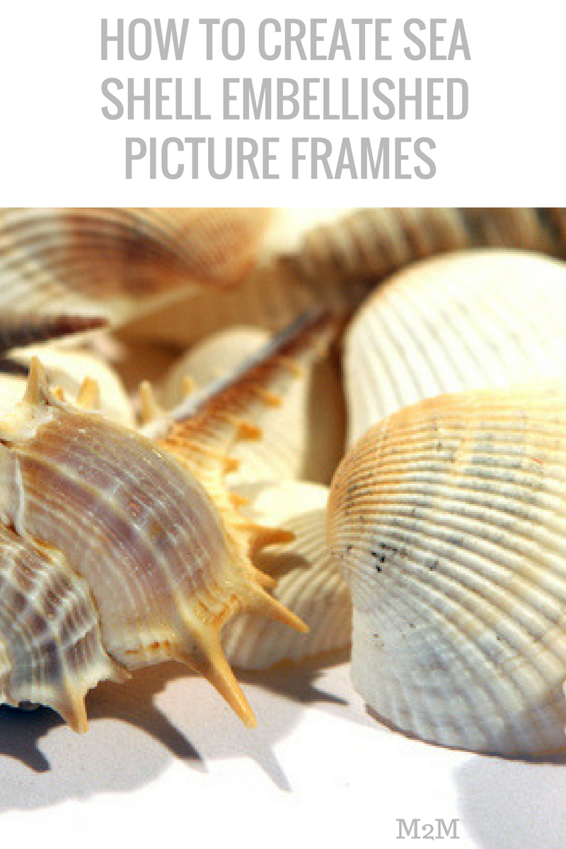 sea shell frames