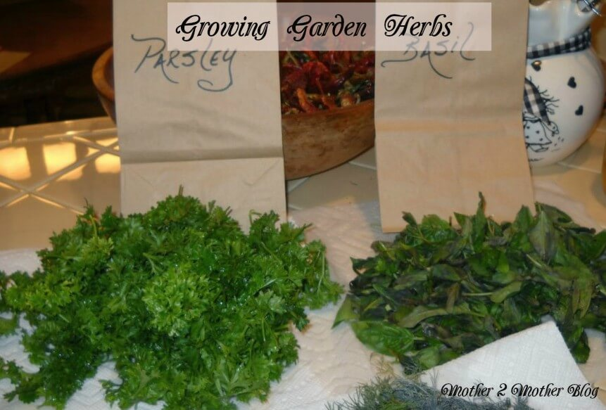 garden herbs, vegetable gardens, preserving garden herbs