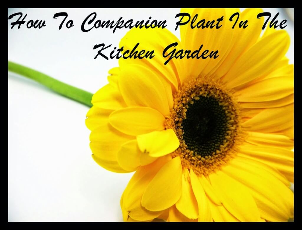 Kitchen Garden Companion Vegetable Gardening Archives Mother2motherblog
