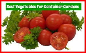 Image-Container-Gardening.jpg
