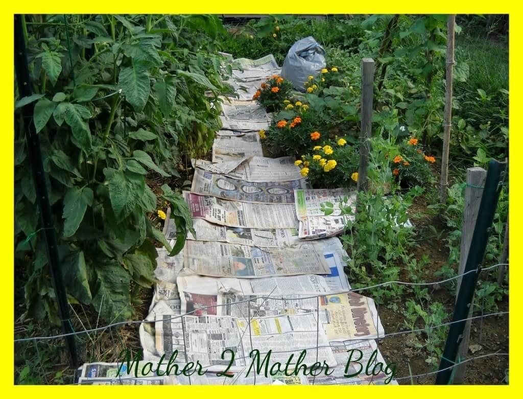 gardening, gardening weeding