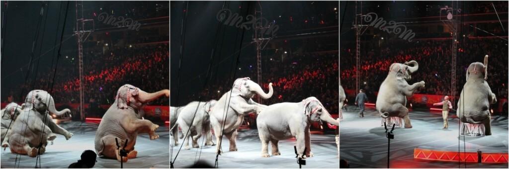 circus elephants,