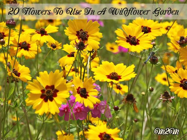 Images-Wildflowers-To-Use