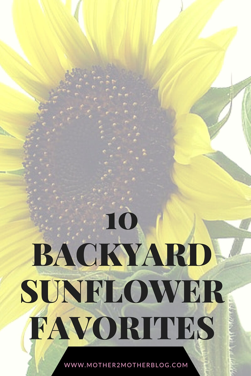 gardening, sunflower varieties, sunflowers