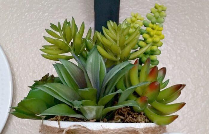 succulents, mug planters, gardening
