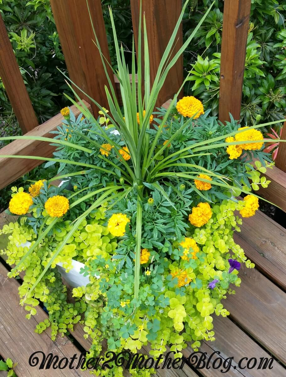 container gardening, outdoor living spaces, gardening