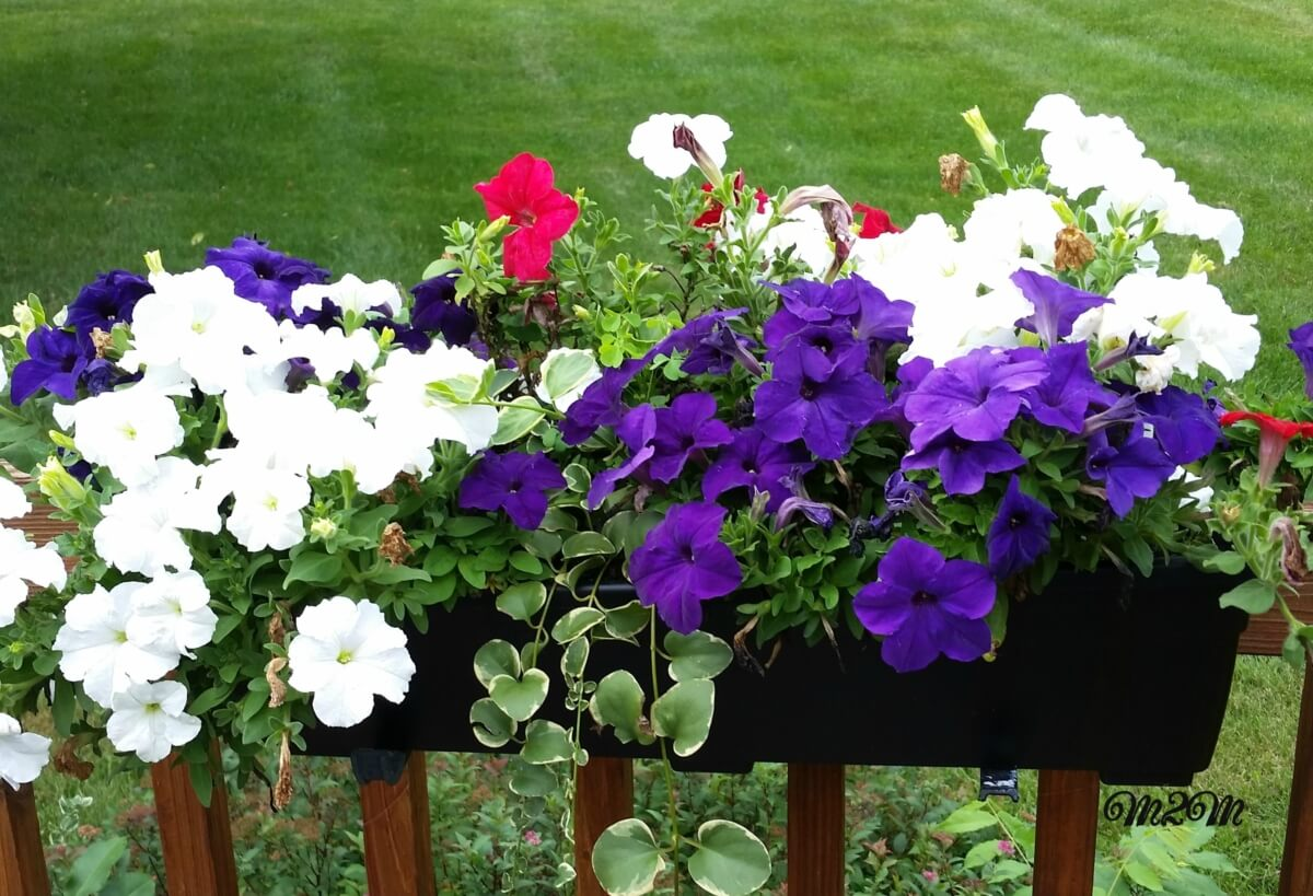 window boxes, container gardens, flower gardens