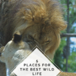 tips on where to find the best wild life experience