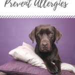 ways to prevent allergeries