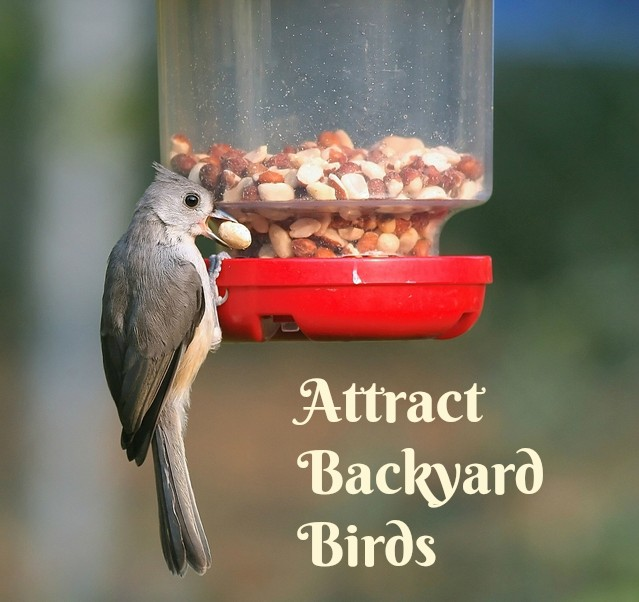 How to Attract Backyard Birds - mother2motherblog
