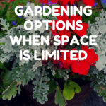 garden options