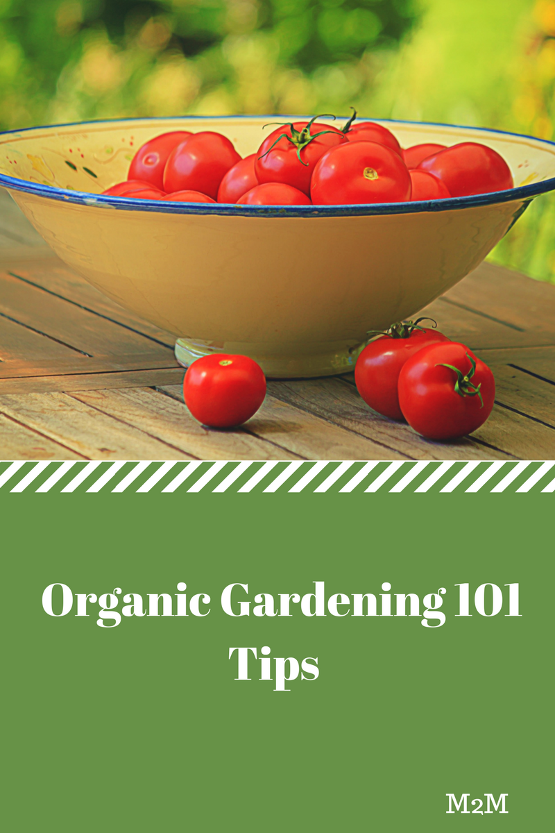 Organic gardening 101 making the most out of your backyard mother2motherblog - Organic gardening practical tips ...