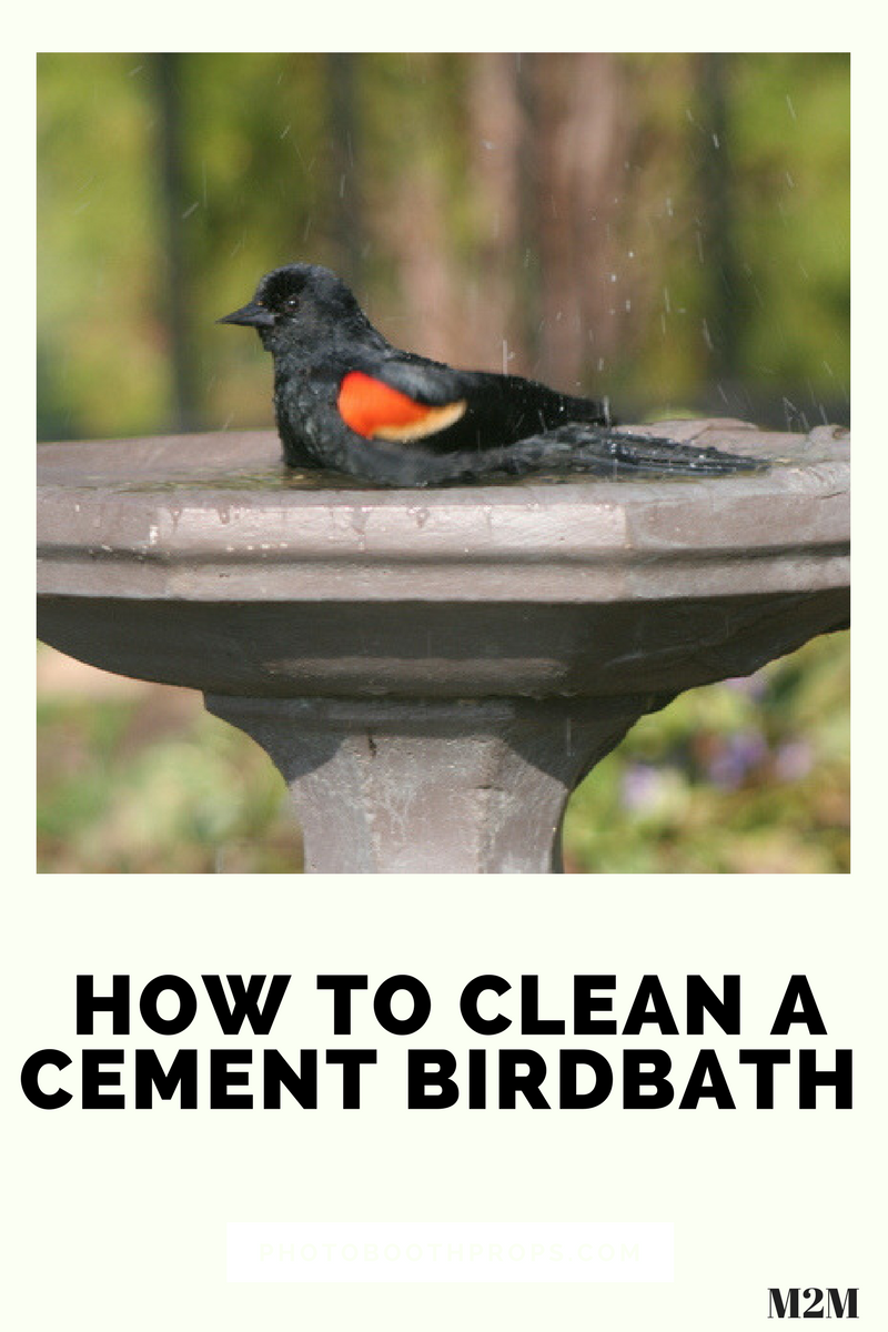how to clean a cement birdbath