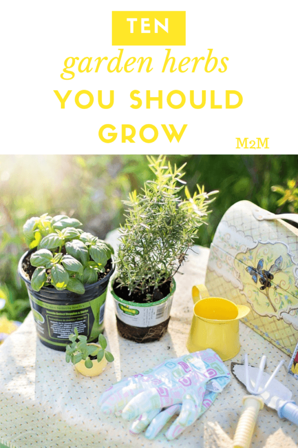 10 Garden Herbs That You Should Grow - mother2motherblog
